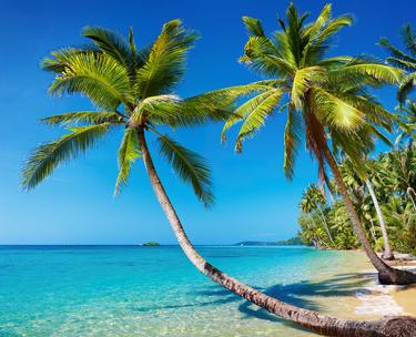 Palmier et plage paradisiaque