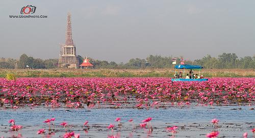 Lac au lotus - Thaïlande