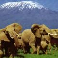 3 raisons d'aller faire un safari au Kenya cet été