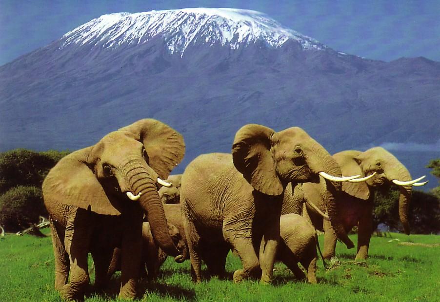 safari-kenya-1
