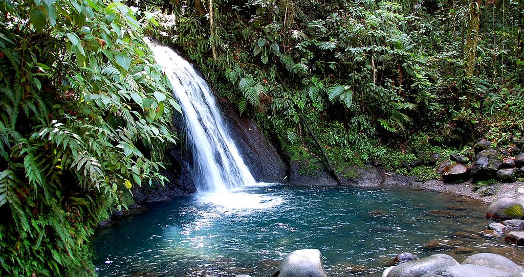 Cascades aux ecrevisses - Guadeloupe