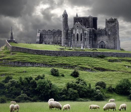 chateau en irlande - moutons