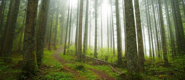 Panorama bois